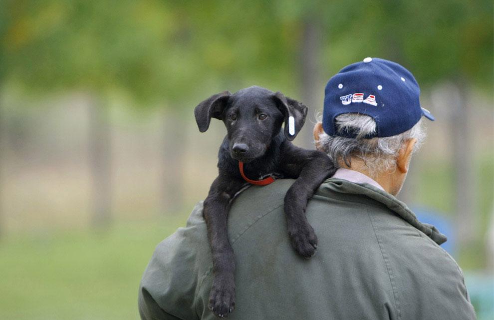 щенок, фото