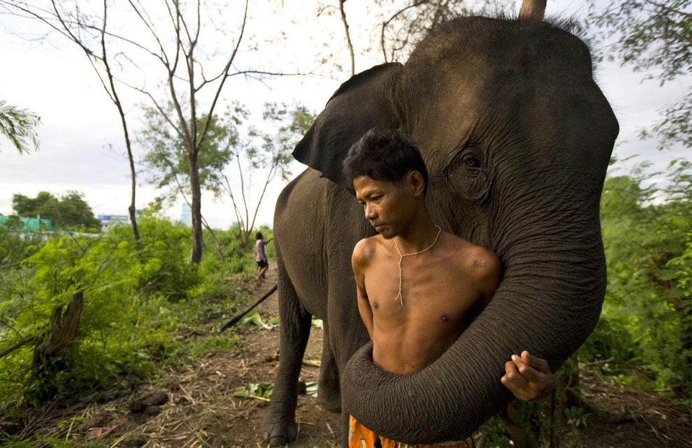 погонщик и слон, фото