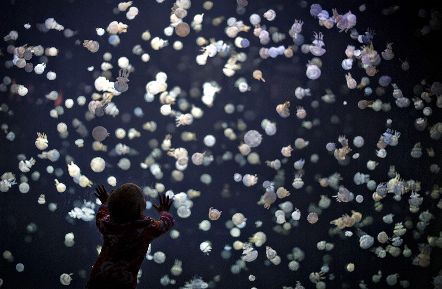 медузы в Ванкуверском аквариуме