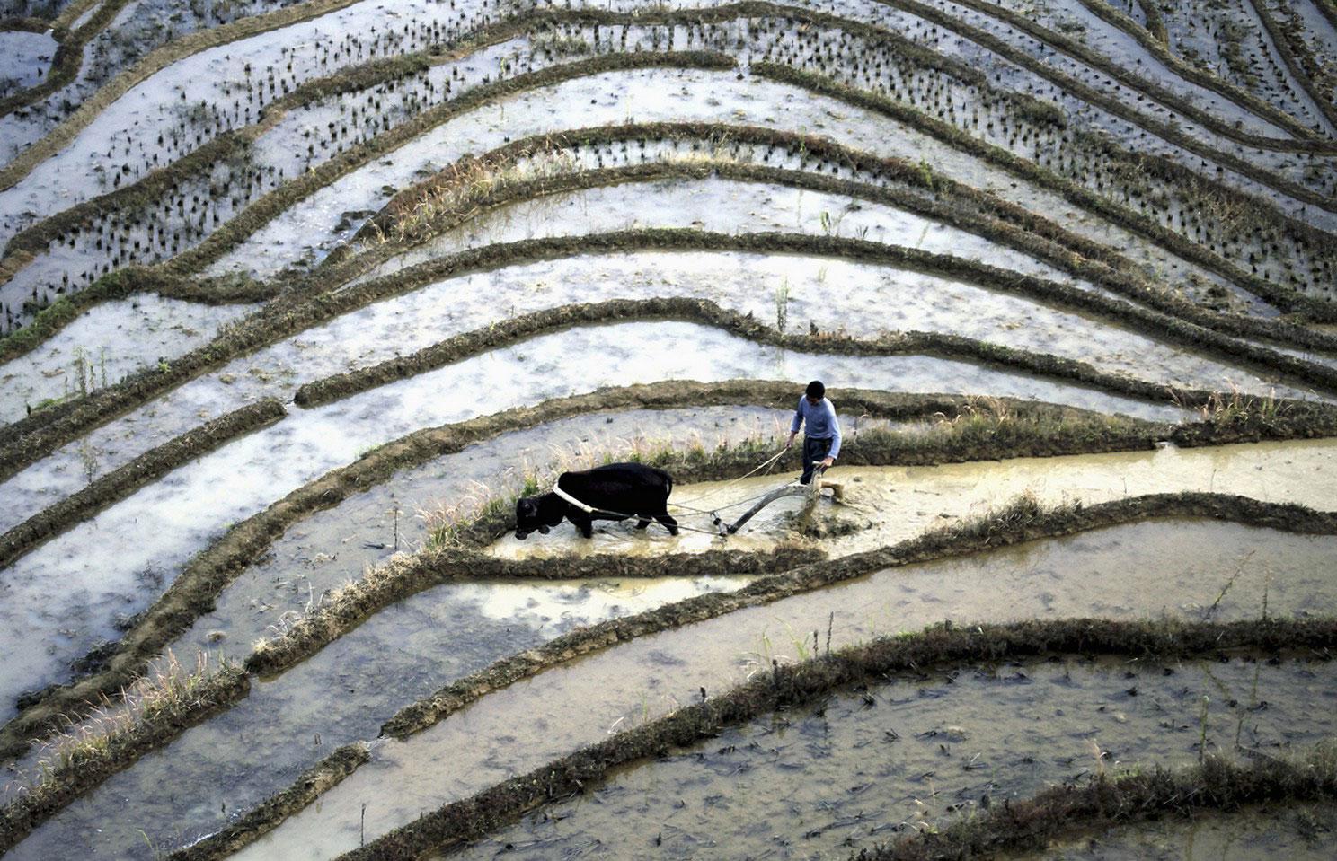 фермер в поле