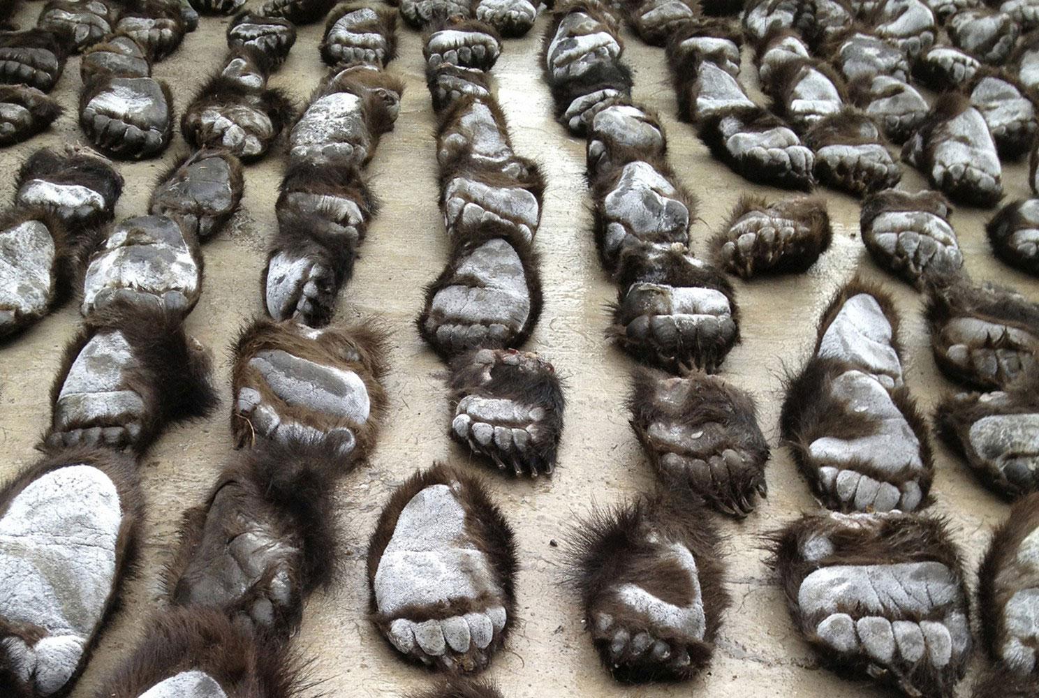 Медвежьи лапы