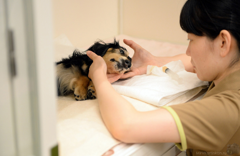 парализованная собака