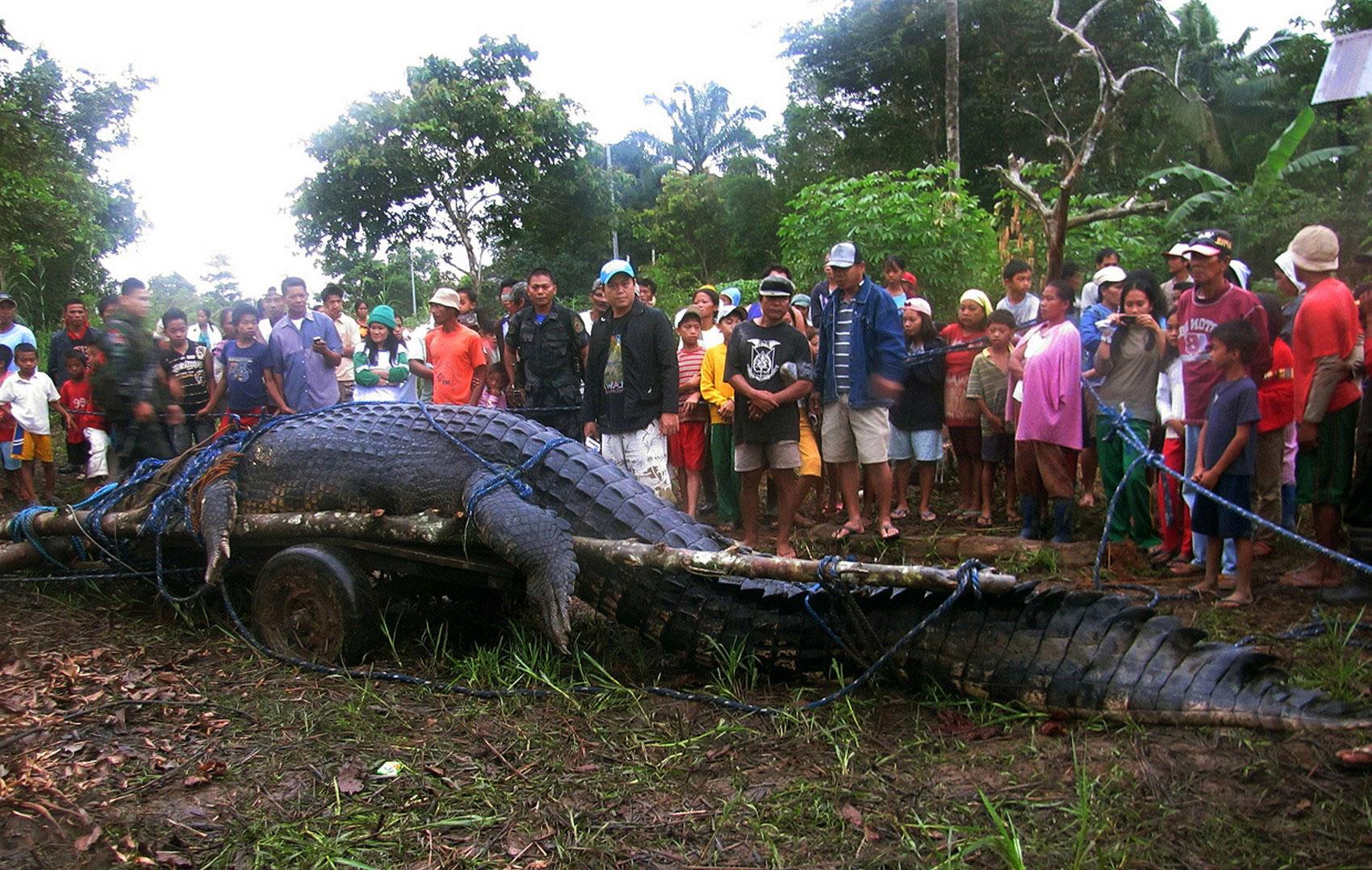 морской крокодил, фото животного мира