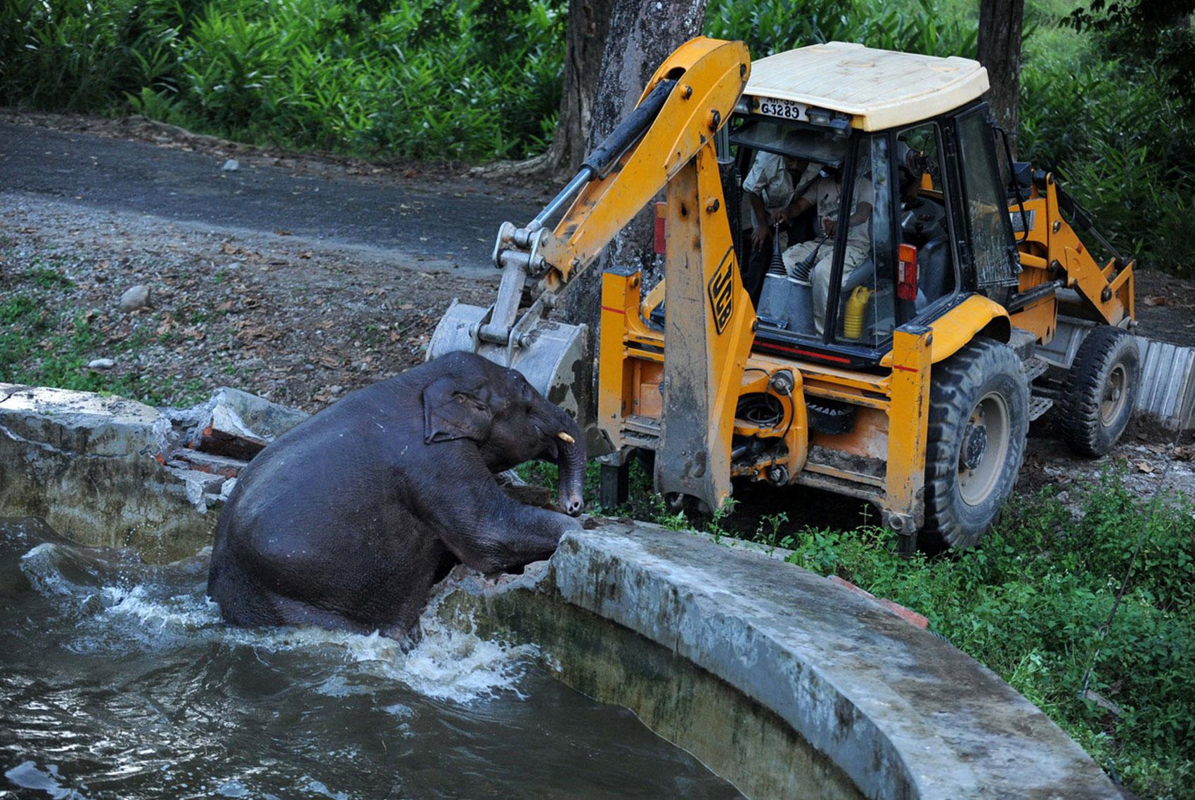 солдаты помогают слоненку выбраться из резервуара с водой, фото