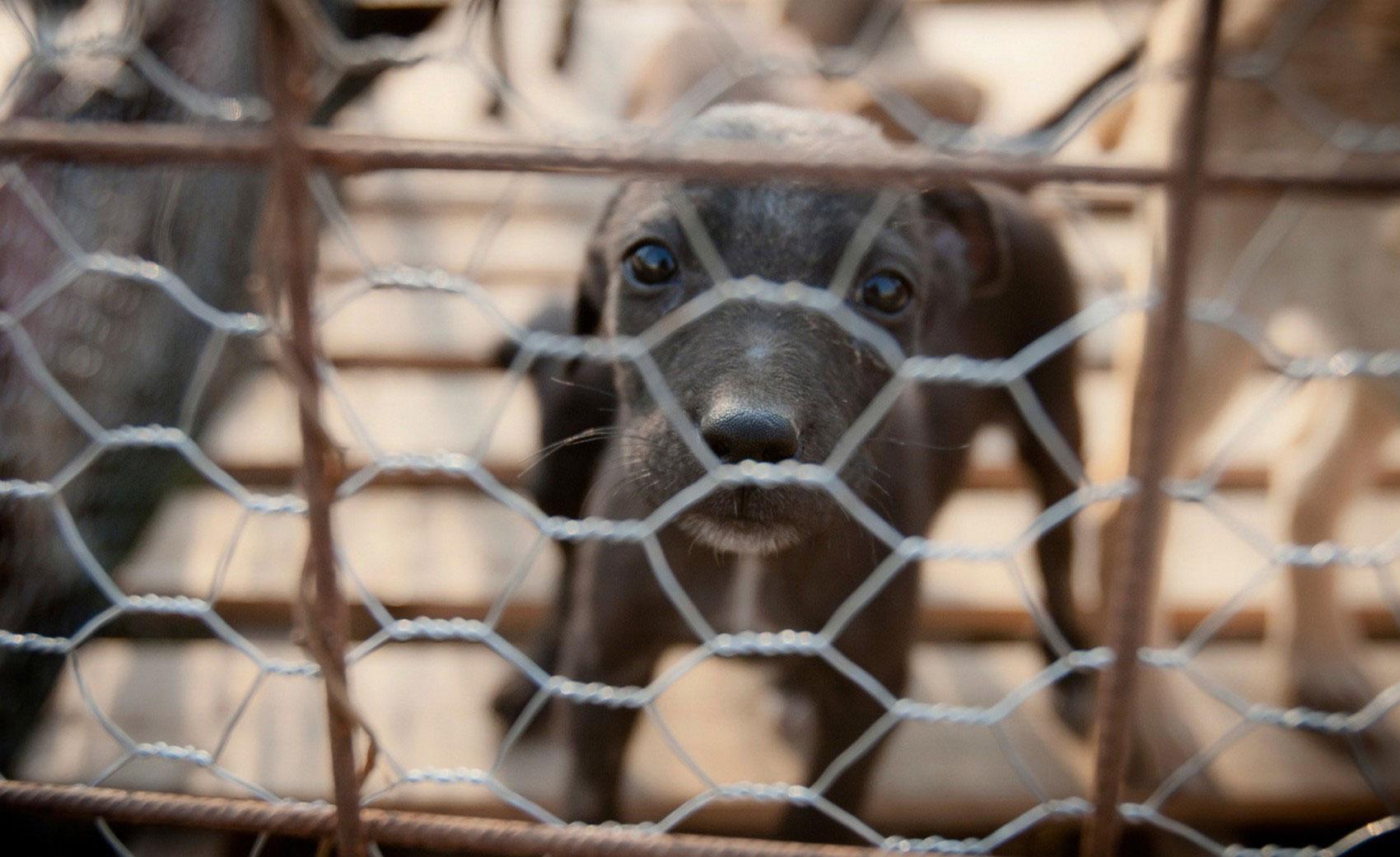 щенок в приюте для бездомных собак, фото