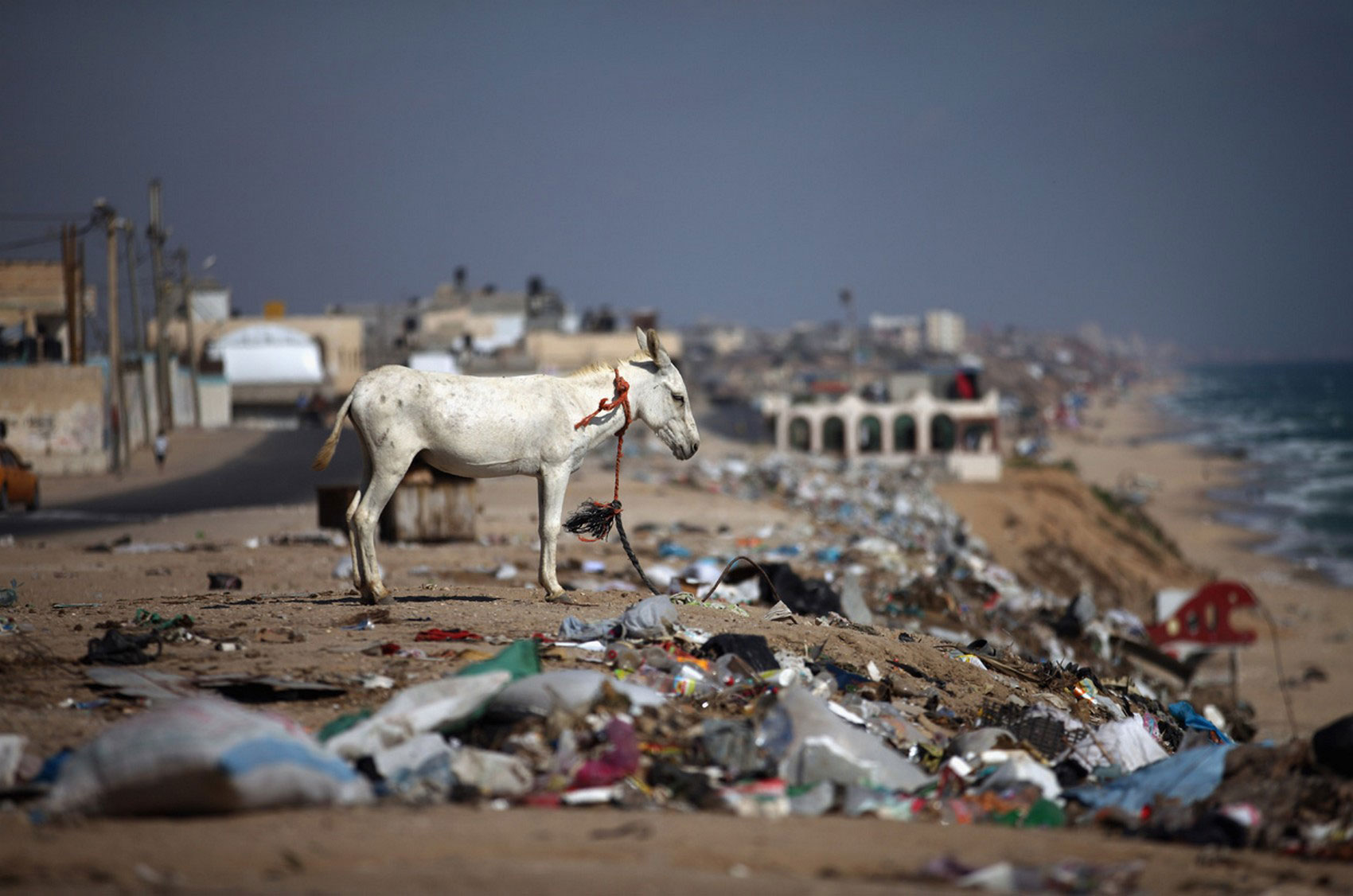Осел среди кучи мусора, фото