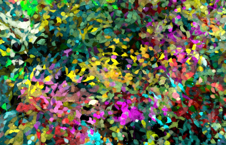 Клетки соединительной ткани, фото под микроскопом