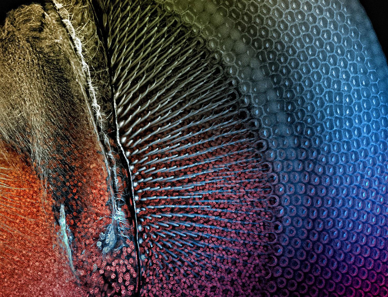 Глаз стрекозы под микроскопом, фото