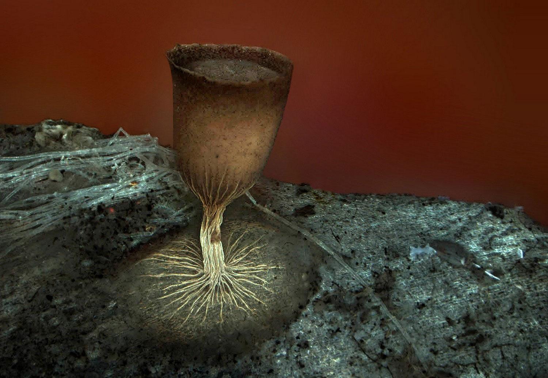 Спорангии плесени под микроскопом